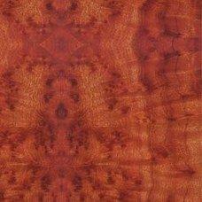 Текстура древесины камфорного дерева