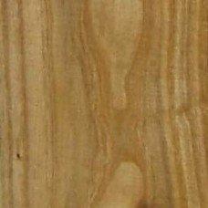 Фактура древесины облепихи