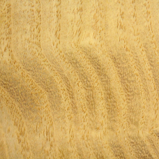 Фактура древесины шелковицы