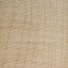 Фактура древесины сикомора