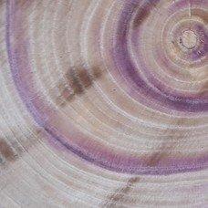 Фактура древесины сирени