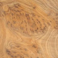 Фактура древесины туйи