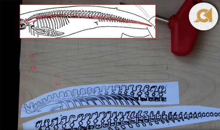 Эскиз скелета кита